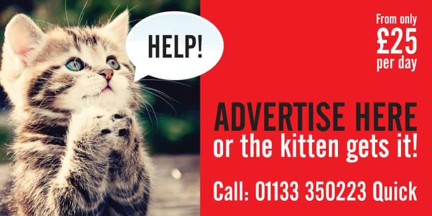 Kitten advertise here poster